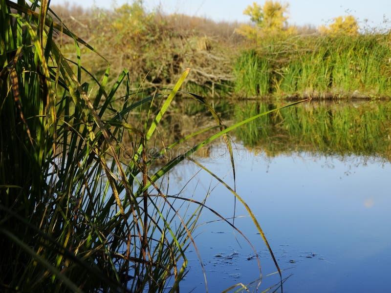 Soirée d'automne sur la rivière photo libre de droits