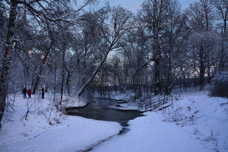 Soirée de Frosty January photographie stock libre de droits