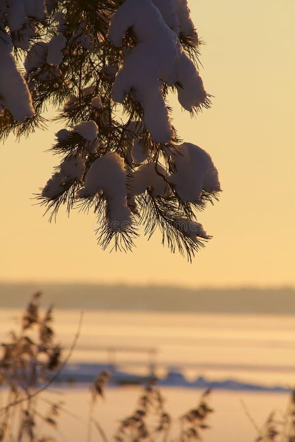 Soirée de l'hiver images libres de droits