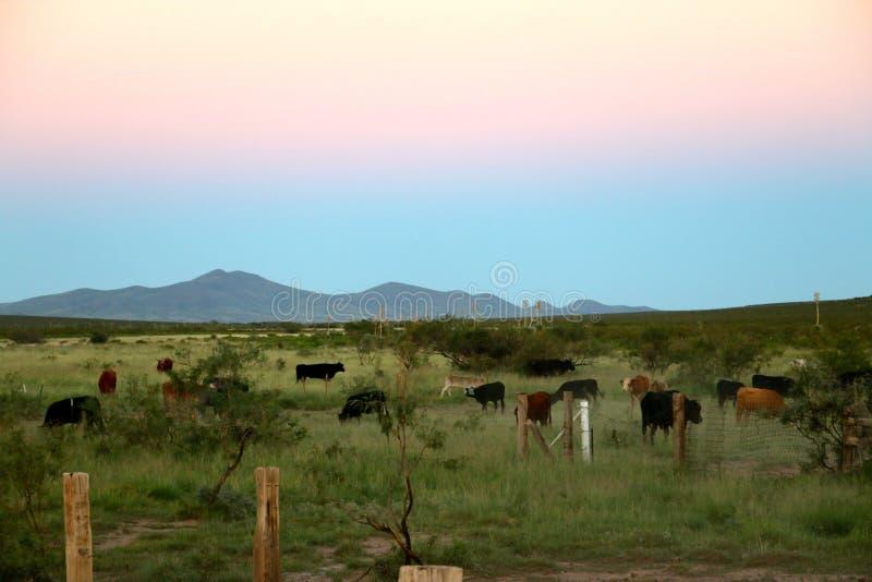 Soirée de ranch d'été photo stock