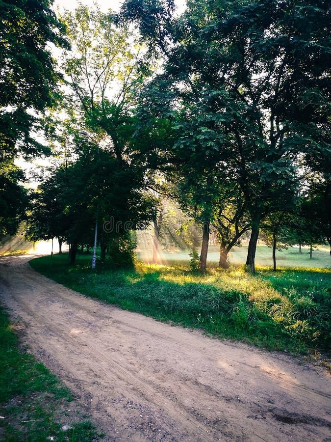 Soirée en parc photographie stock libre de droits