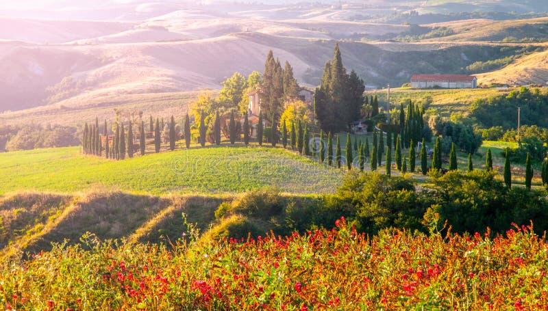 Soirée en Toscane Paysage de Hilly Tuscan avec l'allée d'arbres de cyprès et la maison de ferme, Italie photographie stock libre de droits