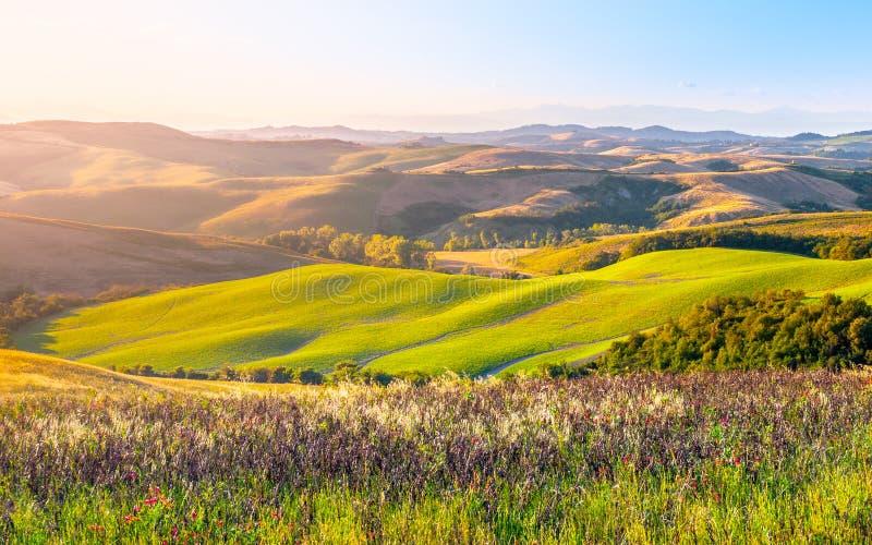 Soirée en Toscane Paysage de Hilly Tuscan dans l'humeur d'or au temps de coucher du soleil avec des silhouettes des cyprès et des photographie stock libre de droits