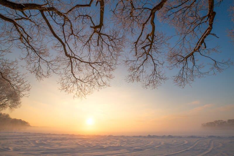 Soirée givrée d'hiver Branches d'arbres avec le gel sur le fond de ciel bleu image stock