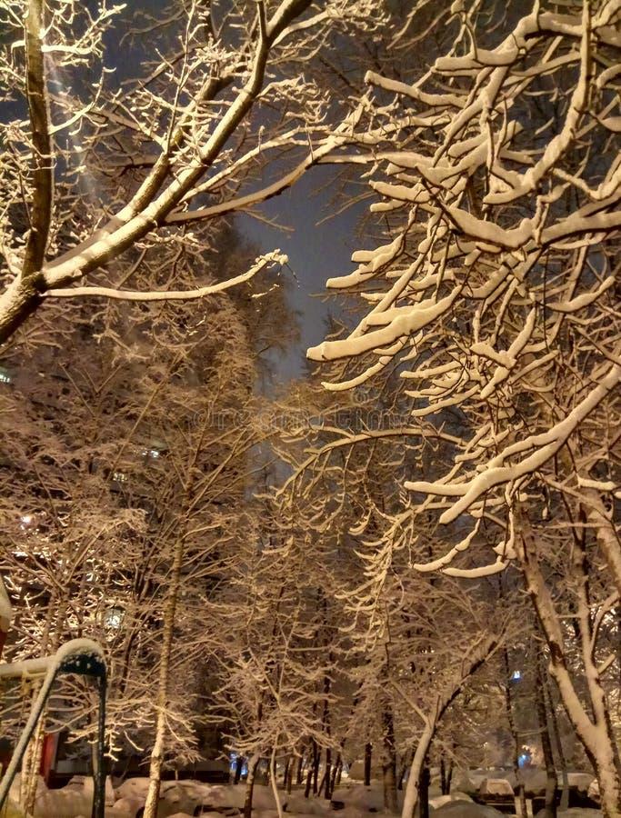 Soir?e d'hiver dans la ville La lumière de la lanterne sur la chute neigeuse d'arbres Papier peint de fond images libres de droits