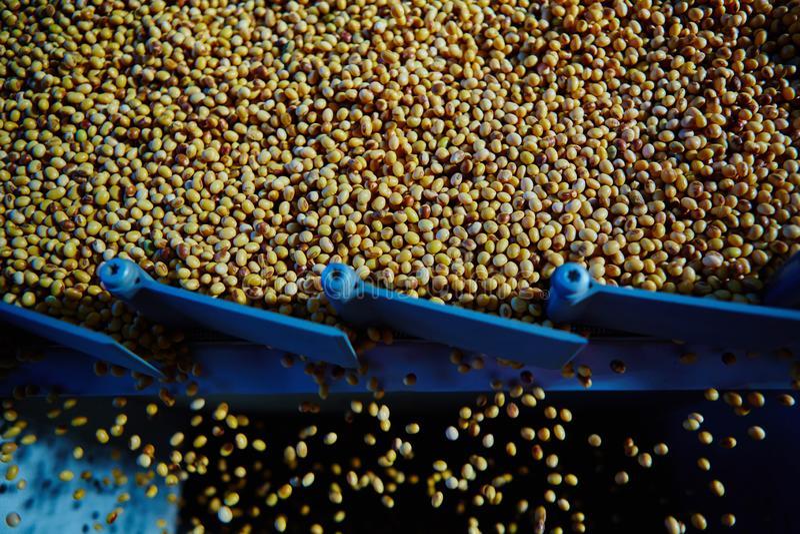 Soja Bean Seed vóór barst Ondiepe DOF royalty-vrije stock fotografie