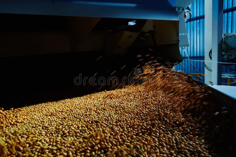 Soja Bean Seed vóór barst Ondiepe DOF royalty-vrije stock afbeeldingen