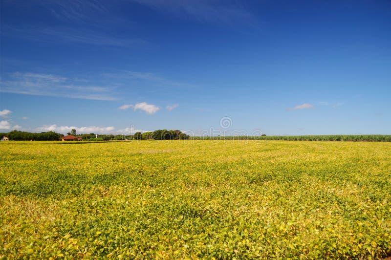 Sojaaanplanting royalty-vrije stock afbeeldingen