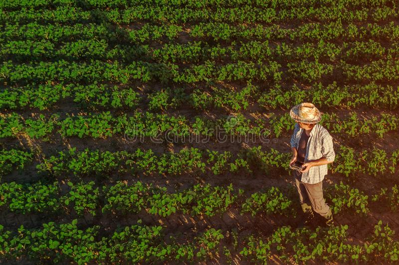 Sojabönabonde med den avlägsna kontrollanten för surr i fält arkivfoto