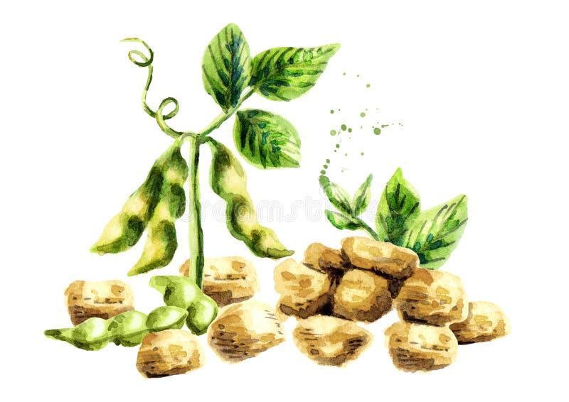 Sojabönakött med växten och bönor vattenfärg royaltyfri illustrationer