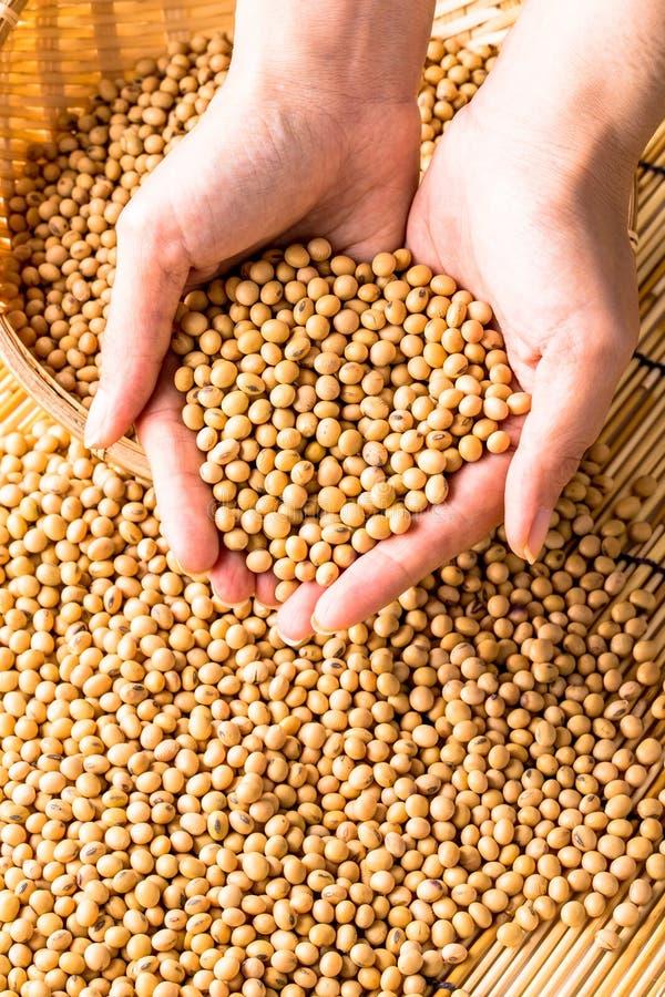 Sojabohnenölbohnen lizenzfreies stockfoto
