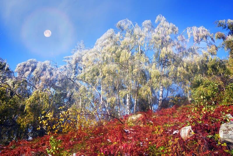 Sokalrand in de herfst stock fotografie