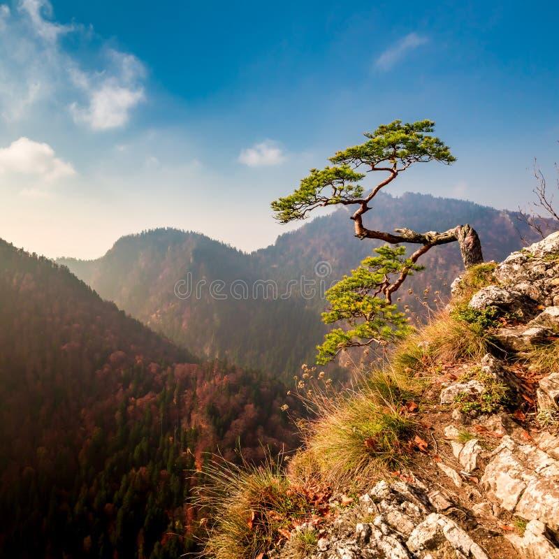 Sokolica peak in Pieniny mountains in autumn, Poland. Europe stock photos