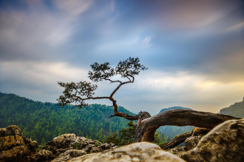 Sokolica peak in Pieniny Mountains. With a famous pine at the top, Poland royalty free stock photo