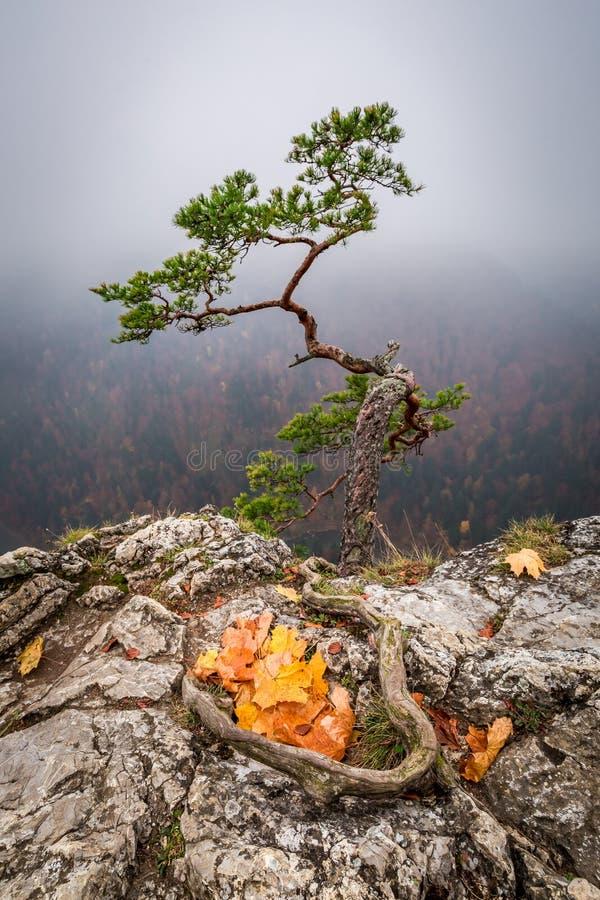 Sokolica peak in Pieniny mountains in Poland at sunrise. Europe royalty free stock image