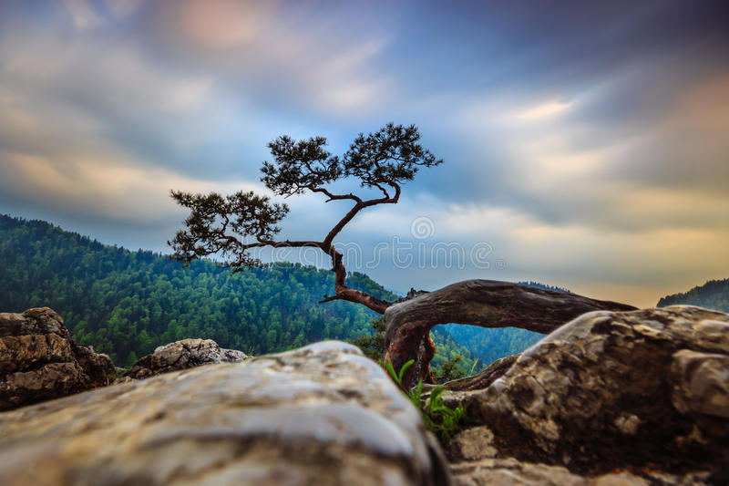 Sokolica peak in Pieniny Mountains. With a famous pine at the top, Poland stock image