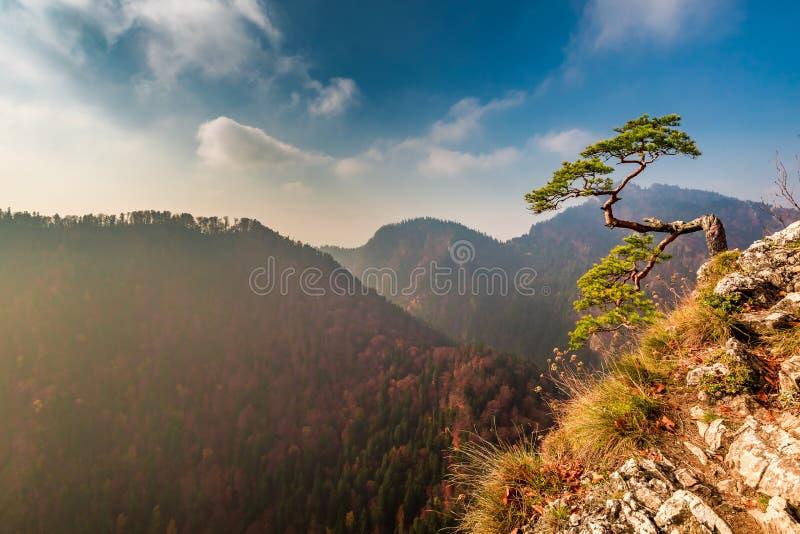 Sokolica peak in Pieniny mountains in sunny day in autumn. Europe stock image