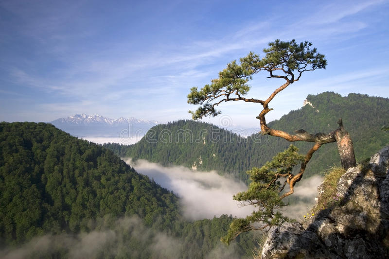 Sokolica Peak in Pieniny, Poland royalty free stock images