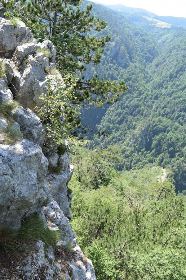 Sokolina峰顶,从边的峭壁 库存图片