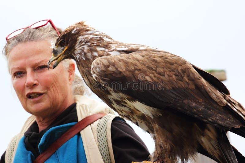 Sokolnictwo orła kobieta obrazy royalty free
