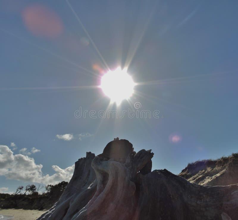 Sol över dött träd på den öde stranden fotografering för bildbyråer