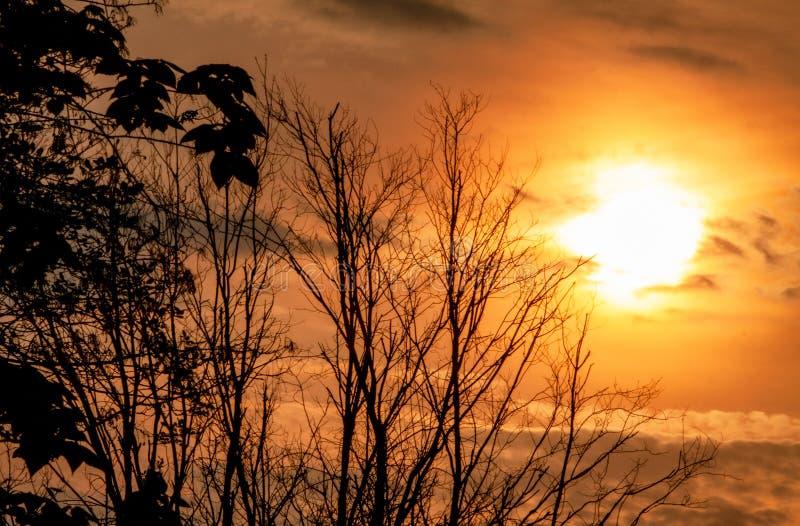 Sol över träden på gryning arkivfoto