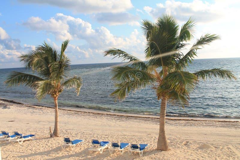 Sol blötta palmträd fotografering för bildbyråer