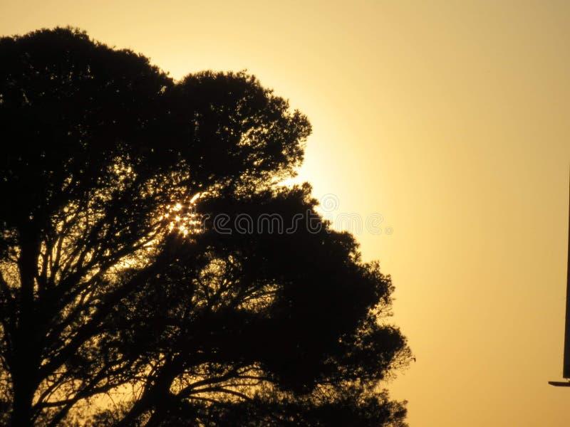 Sol da árvore foto de stock royalty free
