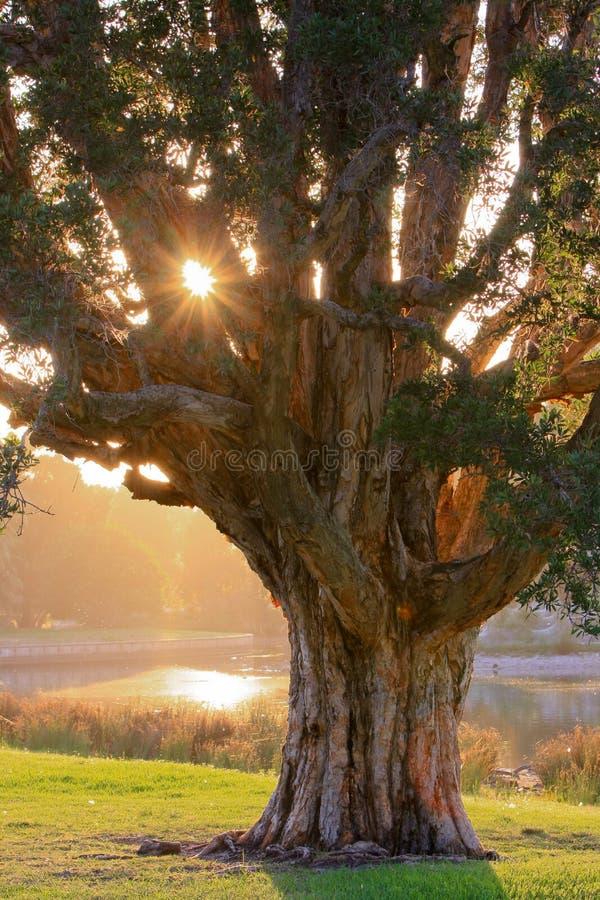 Download Sol Da Manhã Que Brilha Através Das árvores Imagem de Stock - Imagem de água, outdoors: 12810711