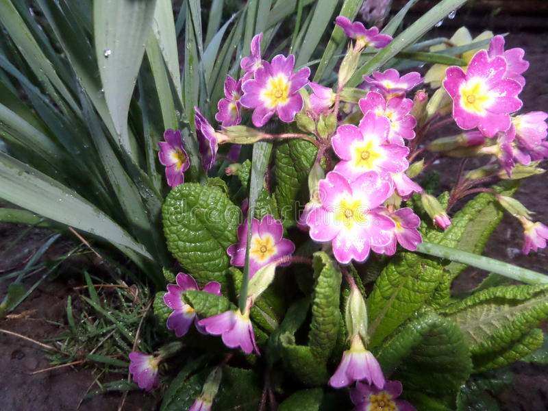 Sol da mola da flor fotografia de stock royalty free