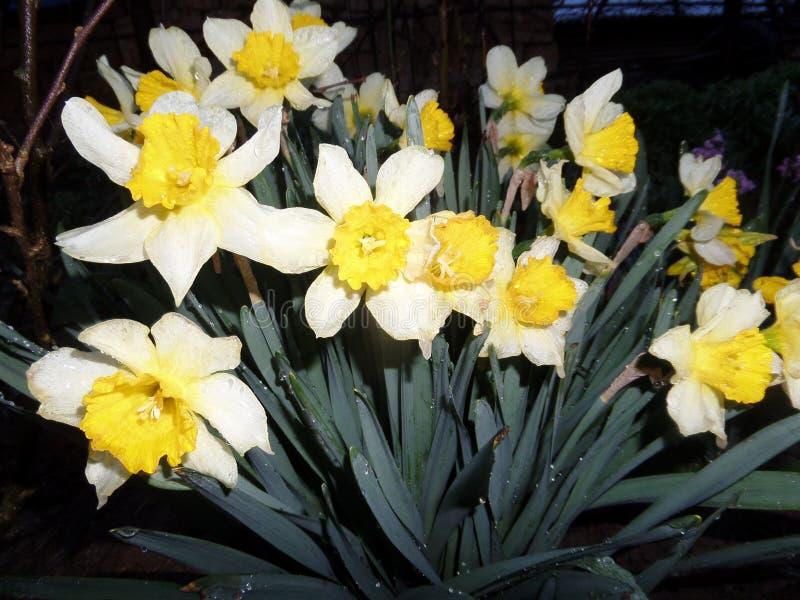 Sol da mola das flores foto de stock