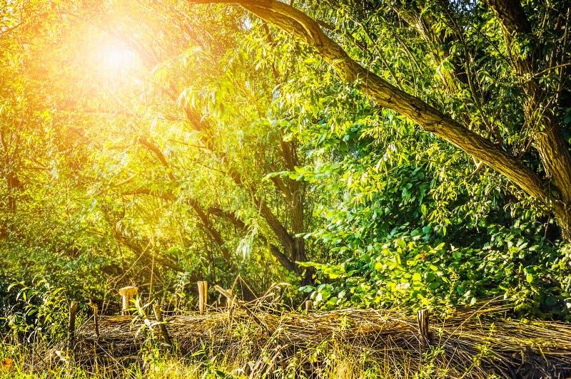 Sol da noite em um jardim abandonado com cerca de vime imagens de stock