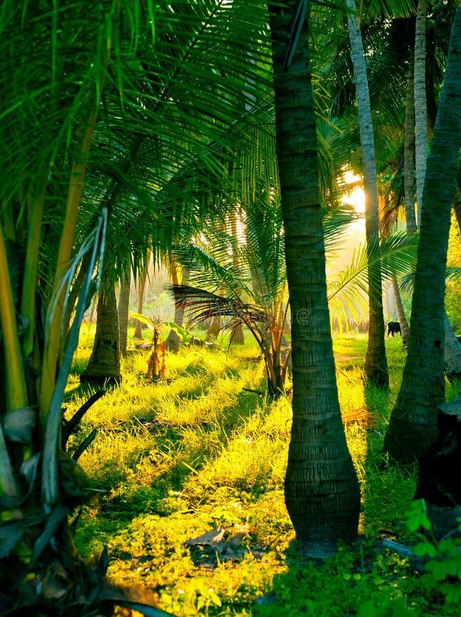 Sol da noite em uma floresta húmida enevoada foto de stock royalty free