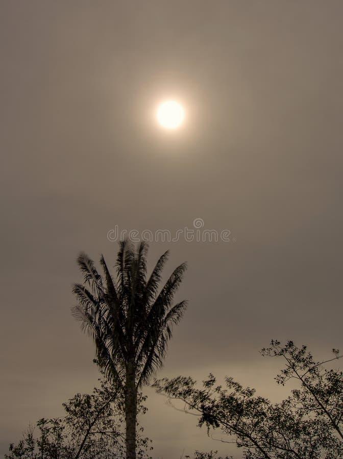 Sol da tarde e uma palmeira foto de stock