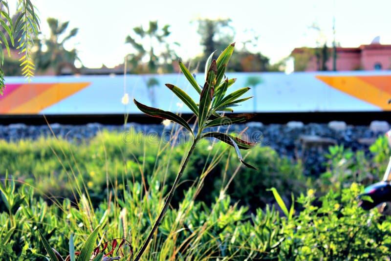 Sol de la flora foto de archivo