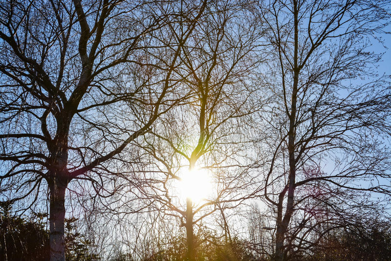Sol de la mañana en invierno BRITÁNICO imagenes de archivo