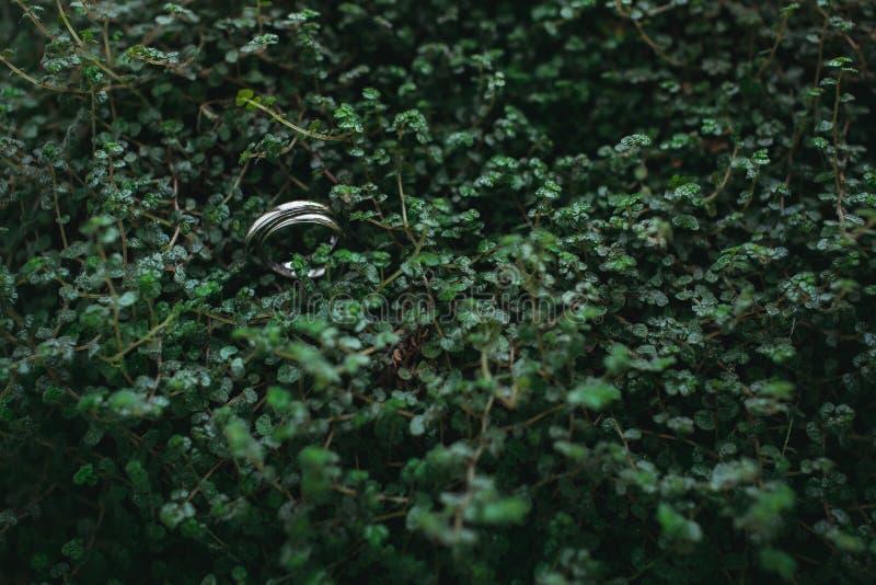 Sol de la naturaleza del otoño de las hojas de los anillos de bodas de los detalles imagenes de archivo