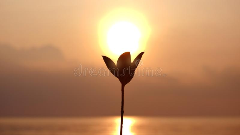 Sol de la puesta del sol en la planta imagenes de archivo