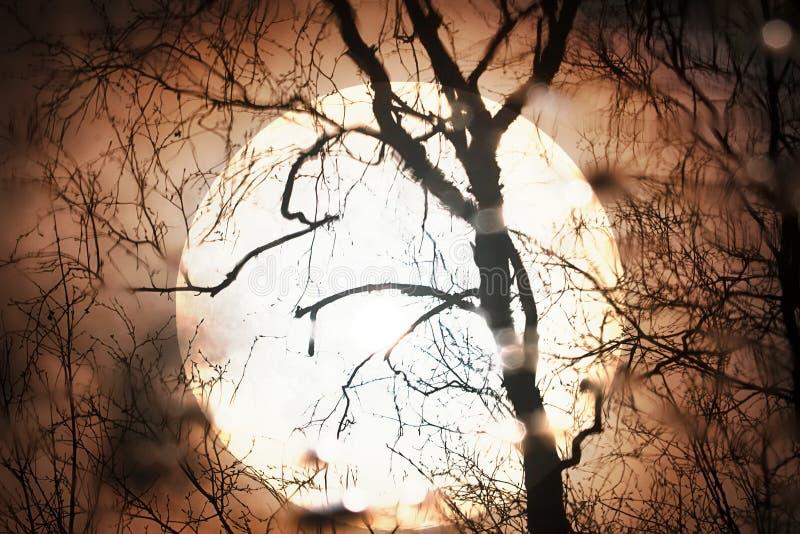Sol de la puesta del sol a través del telescopio a través de la silueta del árbol desnudo fotos de archivo libres de regalías