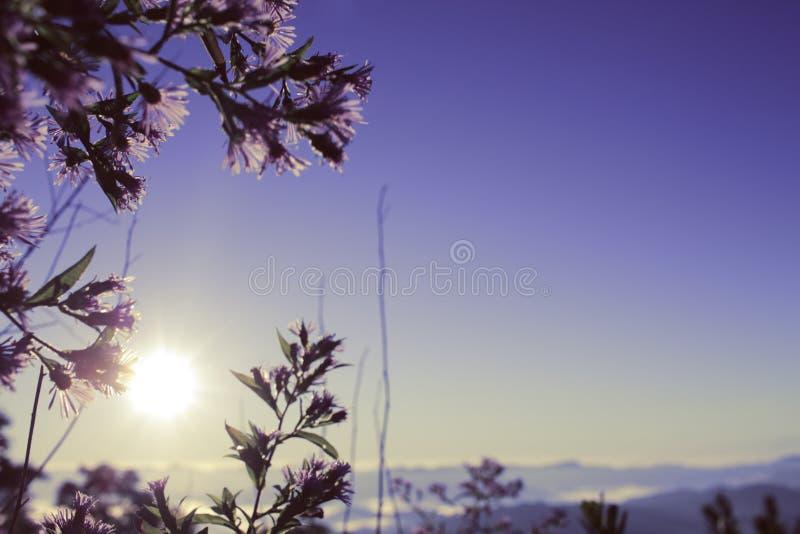 Sol de la salida del sol visto a través de las flores púrpuras foto de archivo libre de regalías