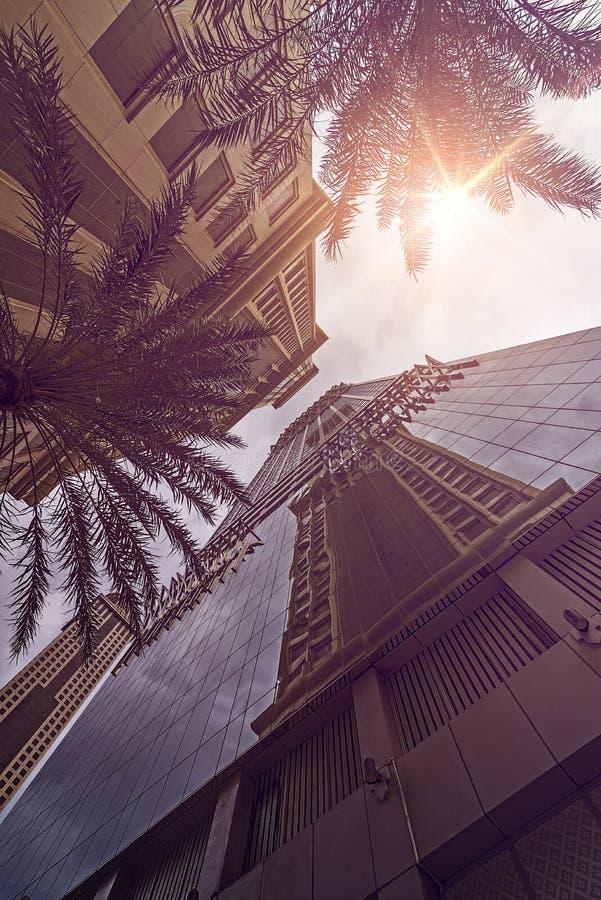 Sol de las palmas de Skyskraper imágenes de archivo libres de regalías