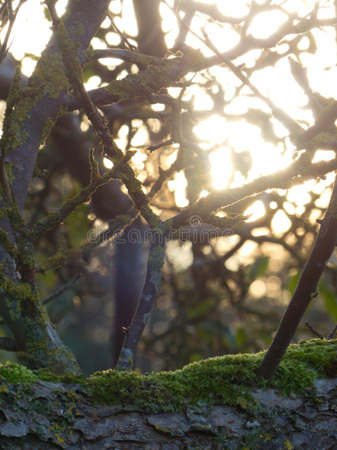 Sol de madera de los treeebranches de las ramas del amanecer de la luz del primer del cierre del árbol de las ramas del bosque de foto de archivo libre de regalías