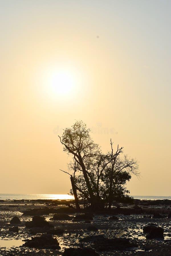 Sol de oro - paisaje con luz del sol brillante, el solo árbol, Rocky Beach y el cielo claro imagen de archivo