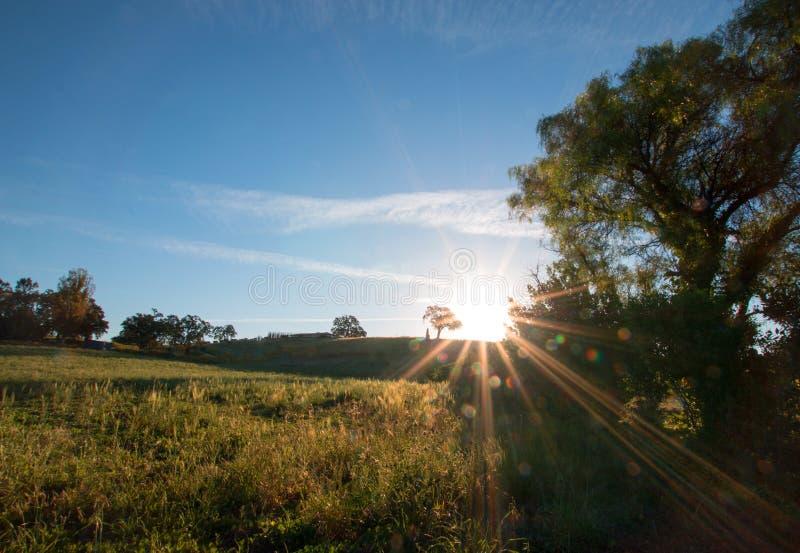 Sol do amanhecer que brilha ao lado do carvalho do vale no monte na região vinícola de Paso Robles no Central Valley de Califórni foto de stock