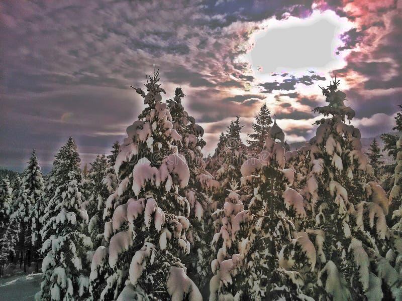 Sol do inverno fotos de stock