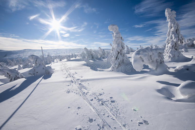 Sol do inverno foto de stock