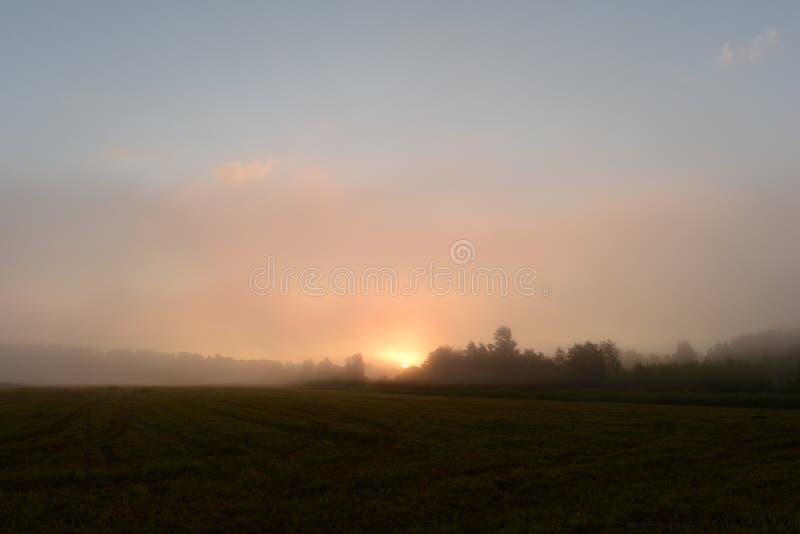 Sol do nascer do sol na névoa da manhã sobre o campo segado além da floresta fotos de stock
