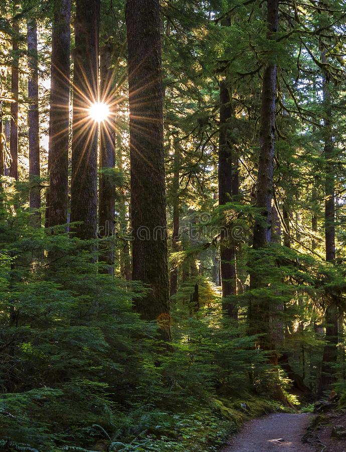 Sol Duc Falls Trail nel N-F olimpico fotografie stock libere da diritti