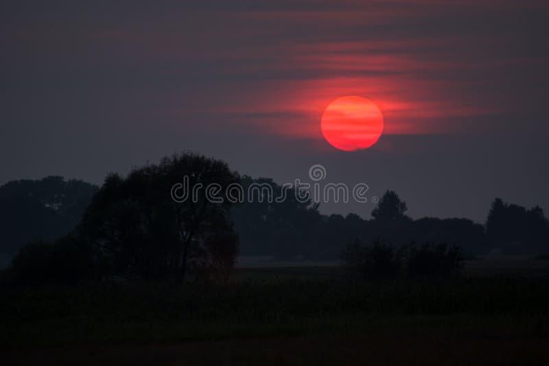 Sol e árvores vermelhos no prado fotografia de stock royalty free
