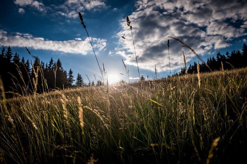 Sol e céu exteriores do whit da grama foto de stock